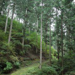Desainer kayu asal Nara Okuyamato, Jepang, akan menampilkan karyanya di pameran 'INTO THE WOODS'