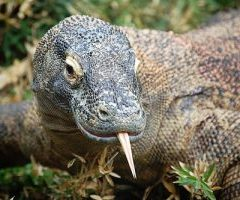 komodo island in indonesia  world natural heritage site will close on january 2020